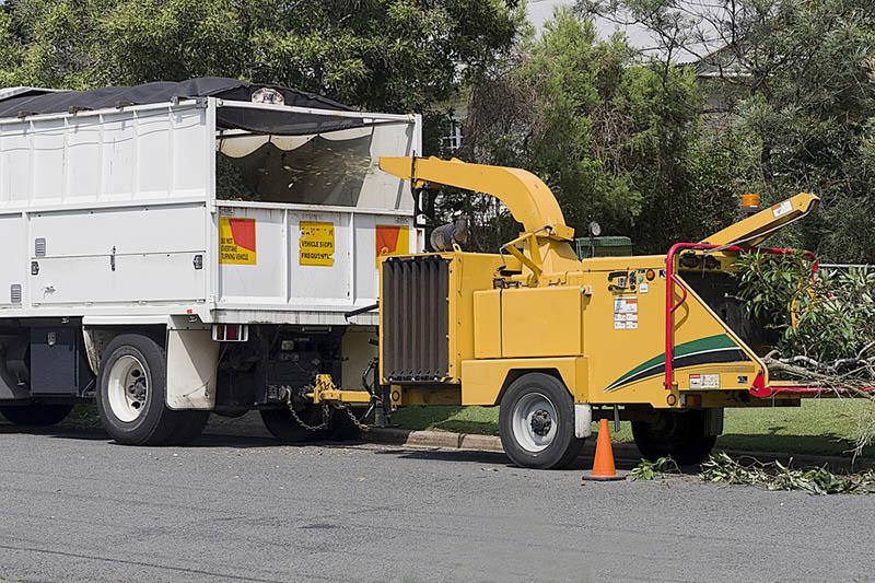 Professional Commercial Tree Removal In Los Feliz