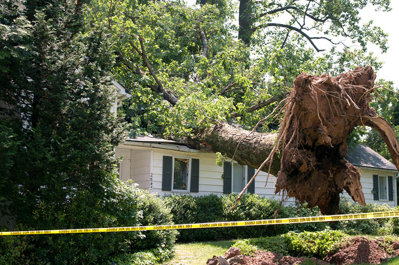 professional residential tree removal in los feliz