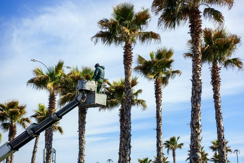 commercial tree trimming in silverlake