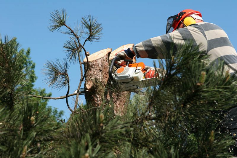tree cutting companies near me