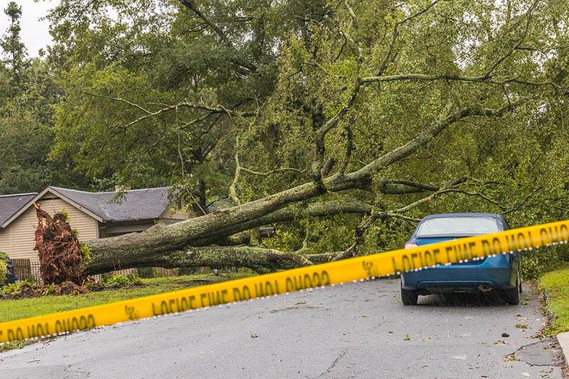 an emergency tree service in silverlake
