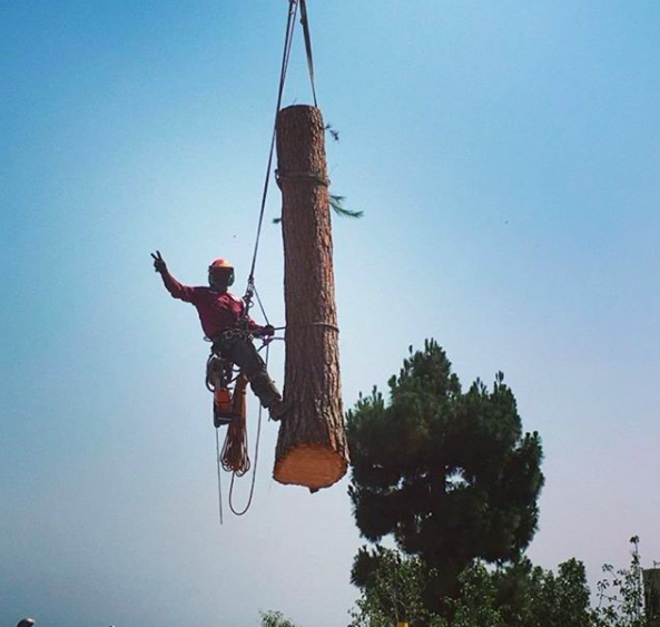 tree removal in century city