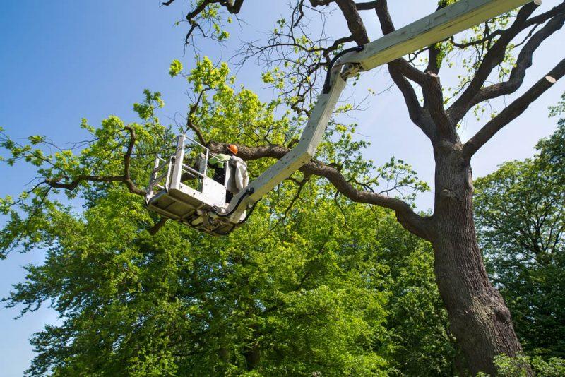 tree service in silverlake