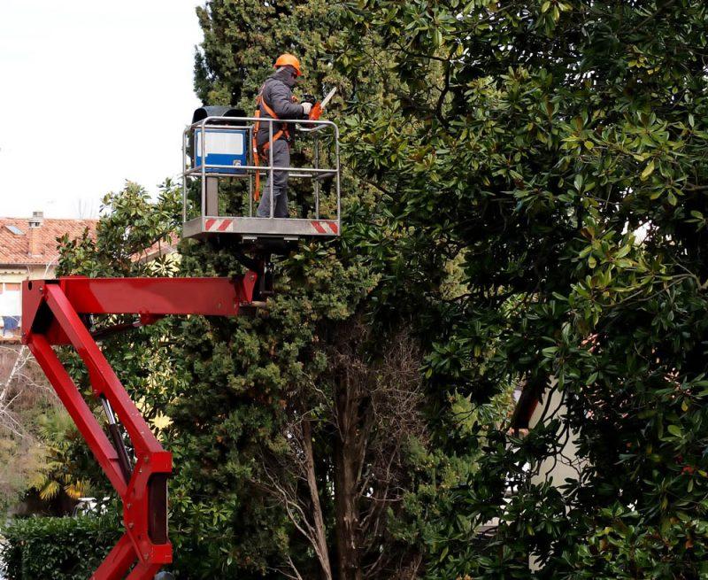 tree trimming in silverlake