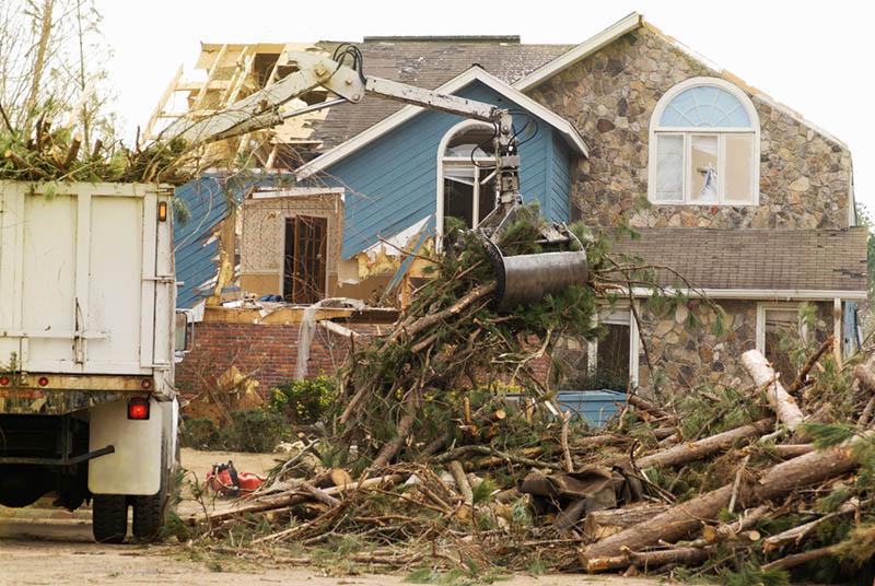 emergency tree service in century city