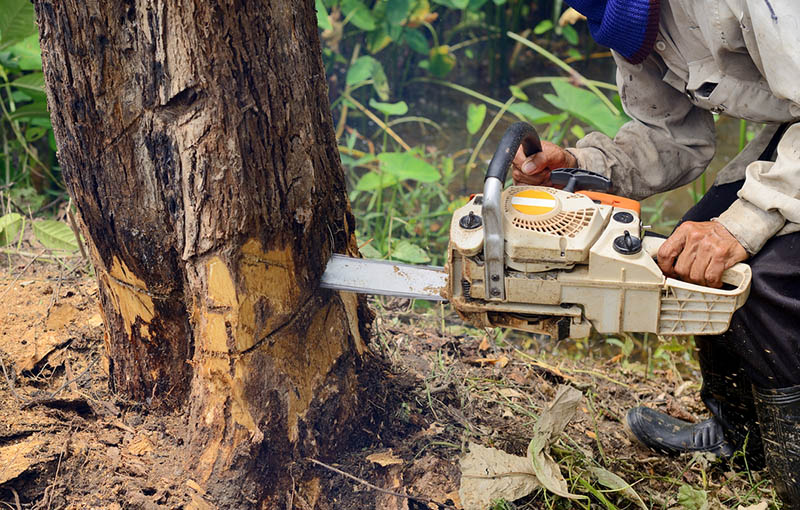 tree removal and stump grinding in silver lake