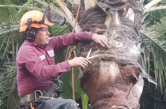 professional tree brush removal service