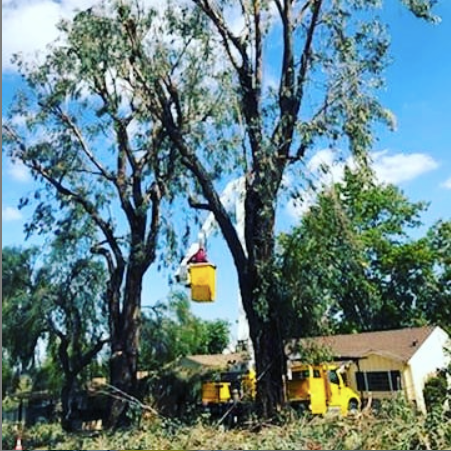 tree trimming service in silverlake