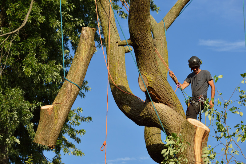commercial tree removal in los feliz