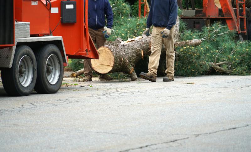 commercial tree removal in Los Feliz