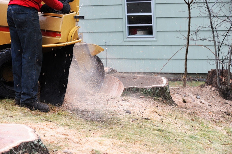 stump grinding in Los Feliz