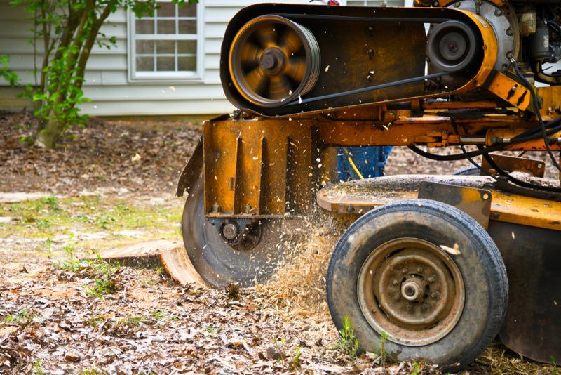 stump grinding in Los Feliz