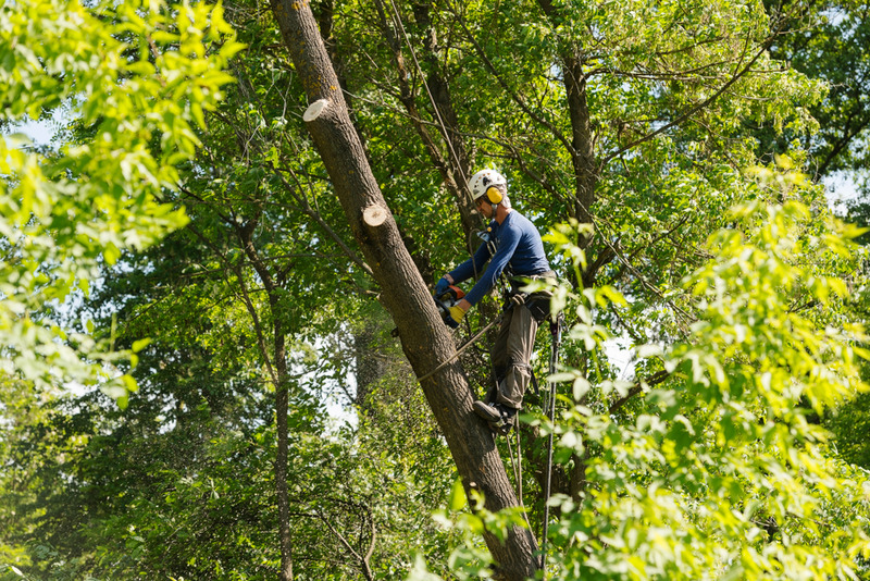Affordable Expert Tree Removal in Century City