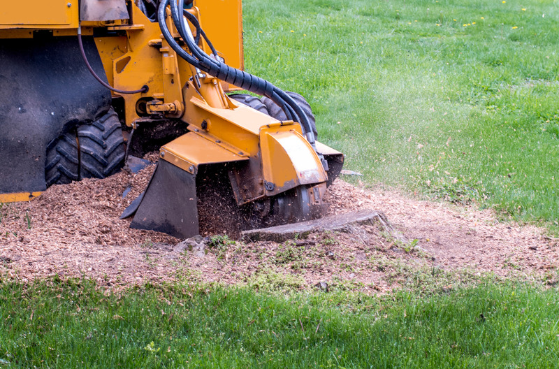 stump grinding in Silverlake