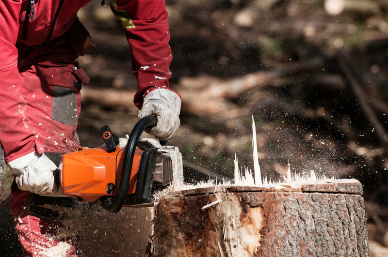 tree removal and stump grinding Century City