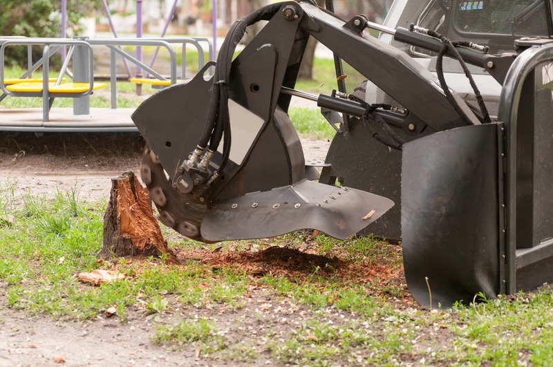 tree removal and stump grinding in Los Feliz