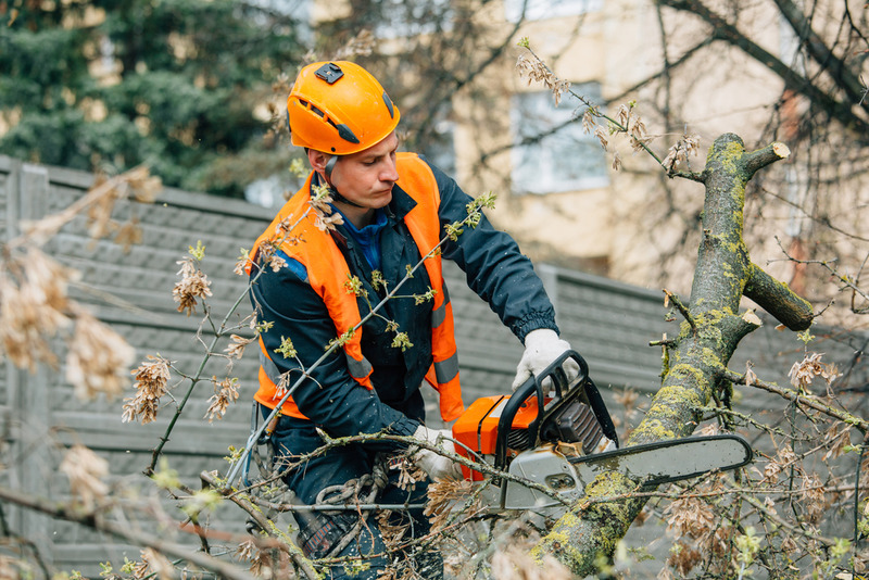 residential tree service in Silver Lake