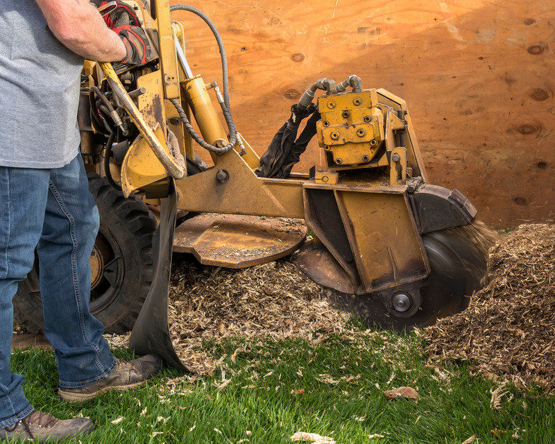 hire an expastump grinding Century Cityert for stump grinding in century city