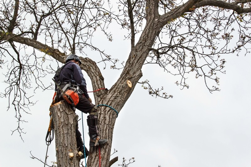 improve your yard with our residential tree trimming in los feliz