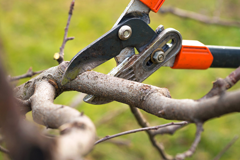 residential tree service in Century City