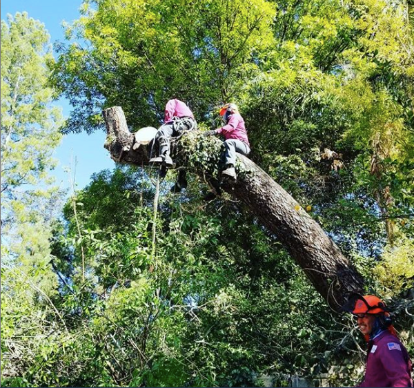 emergency tree removal in Silver Lake