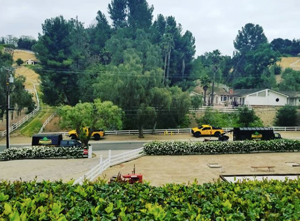 commercial tree service in century city