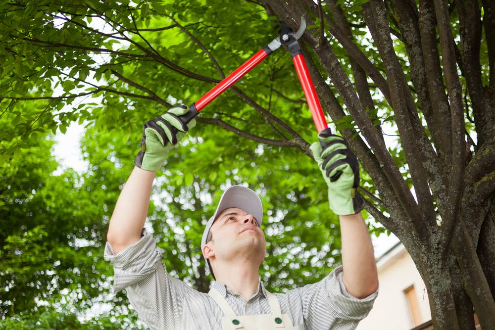 residential tree trimming in silver lake