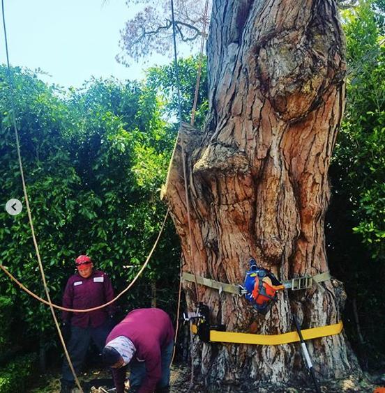 tree brush removal service in silverlake