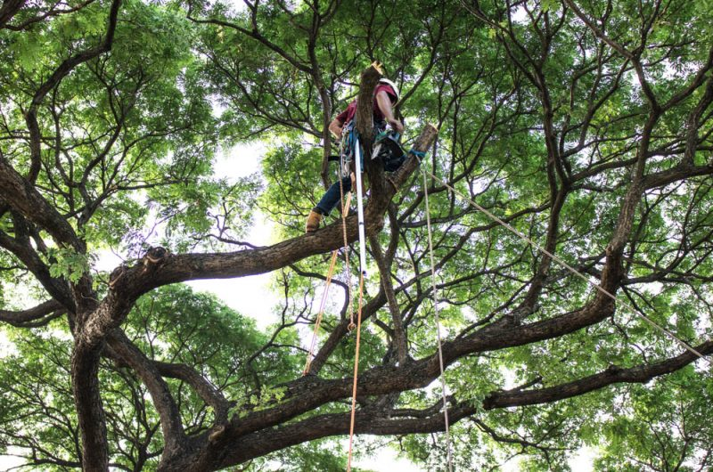 tree service in los feliz